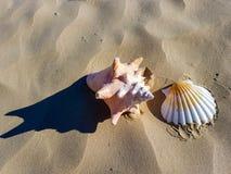 在韦茅斯海滩的海壳 图库摄影