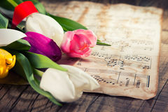 在音乐便条纸的郁金香 库存照片