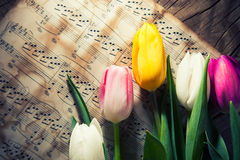 在音乐便条纸的郁金香 免版税库存照片