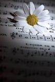 在音乐的戴西花注意板料 免版税库存照片