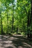 在页岩凹陷蜜饯的足迹在俄亥俄 库存图片
