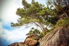 在顶面山的偏僻的树在天空背景中 库存照片