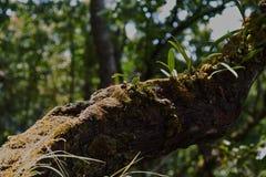 在顶面山的兰花叶子 免版税库存图片