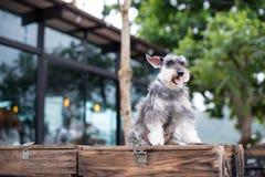 在顶面箱子的一条狗 库存图片