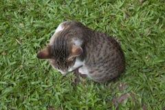 在顶面草的猫 免版税库存图片