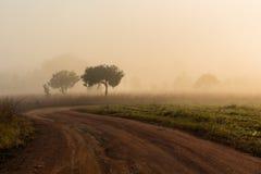 在领域中的土路通行证在早晨薄雾 库存图片