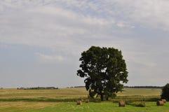 在领域中间的两棵树 库存照片