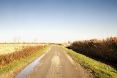 在领域之间的泥泞的路 库存图片