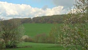 在领域前面的开花的树 影视素材