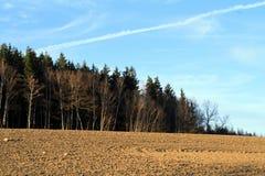 在领域后的森林 库存照片