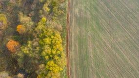 在领域和森林之间的路秋天 免版税库存图片