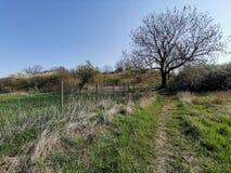 在领域和灌木风景的偏僻的老树与在途中的明亮的天空 免版税库存照片