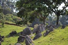 在领域埋置的岩石 免版税图库摄影