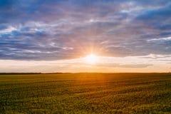 在领域或草甸的日落日出 在地面的明亮的剧烈的天空 库存照片