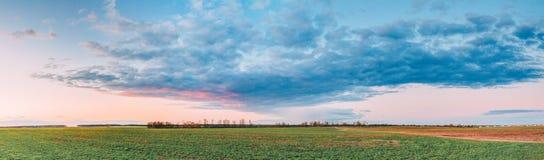 在领域或草甸的日落日出 在绿色地面的明亮的剧烈的天空 库存照片