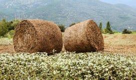 在领域收集的谷物 免版税库存照片