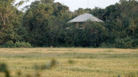 在领域旁边的传统泰国房子 影视素材