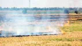 在领域烧伤的干草 免版税库存照片