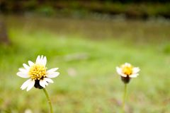 在领域的一朵小的草花 免版税库存照片