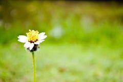 在领域的一朵小的草花 库存照片