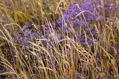 在领域的一朵花 库存图片