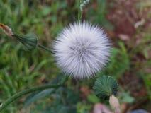 在领域的一朵花 免版税库存图片