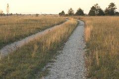 在领域的一条道路看起来象金黄 免版税库存图片