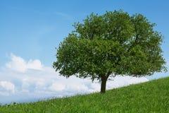 在领域的一棵树 免版税库存图片