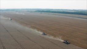 在领域的两台收割机收集麦子 联合收割机农业机器收集金黄 影视素材
