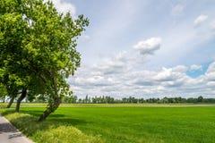 在领域的乡下视图,与蓝天,白色云彩 免版税库存图片