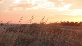 在领域的五颜六色的日落,在狂放的美好的日落 股票录像