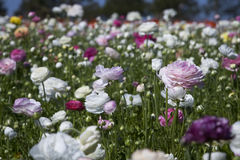 在领域的五颜六色的花 免版税库存图片