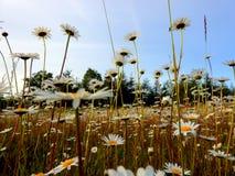 在领域的五颜六色的花!! 免版税库存图片