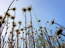 在领域的五颜六色的花!! 免版税库存照片