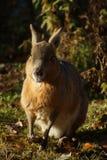在领域的兔宝宝 免版税库存照片
