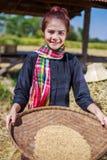 在领域的农夫妇女打谷的米 免版税库存照片