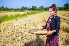 在领域的农夫妇女打谷的米 免版税库存图片