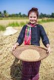 在领域的农夫妇女打谷的米 库存照片