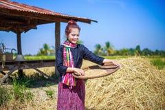 在领域的农夫妇女打谷的米 免版税图库摄影