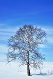 在领域的冬天树 图库摄影