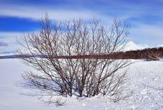 在领域的冬天树 免版税库存照片