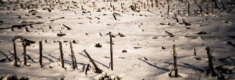 在领域的冬天 免版税库存照片