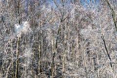 在领域的冬天 免版税库存图片