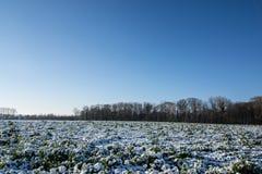 在领域的冬天 库存图片