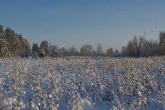 在领域的冷淡的天 库存图片