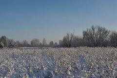 在领域的冷淡的天 库存照片