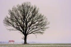 在领域的单独树 时数横向季节冬天 免版税库存照片