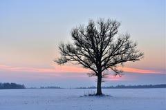在领域的单独树 时数横向季节冬天 免版税库存图片