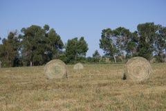 在领域的圆的干草捆在贝尔格莱德,蒙大拿 免版税库存照片