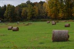 在领域的圆的干草捆 库存图片